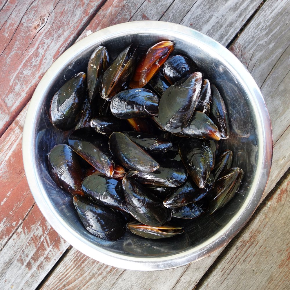 Fresh Catch CSF - PEI Mussels