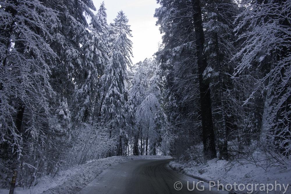 Yosemite 024.jpg