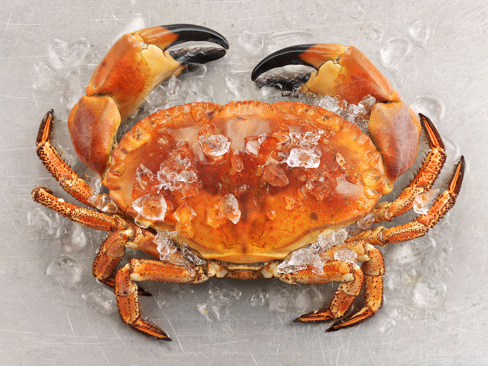Food Photography Photographer London UK Crab