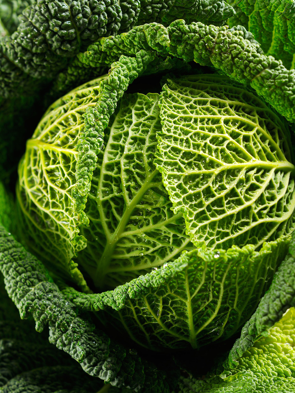 Food Photography Photographer London UK Savoy Cabbage