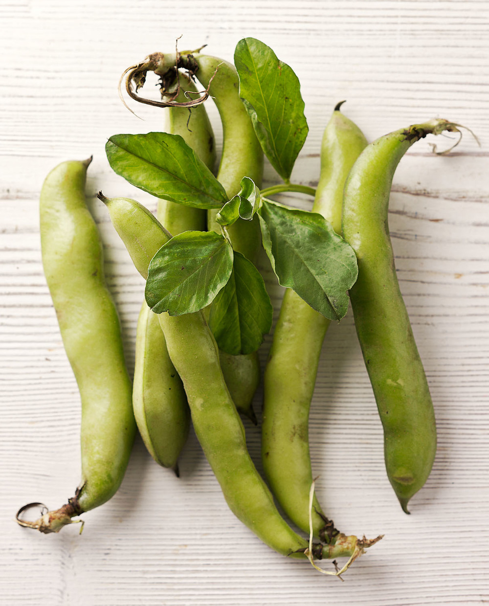 Food Photography Photographer London UK Broad Bean