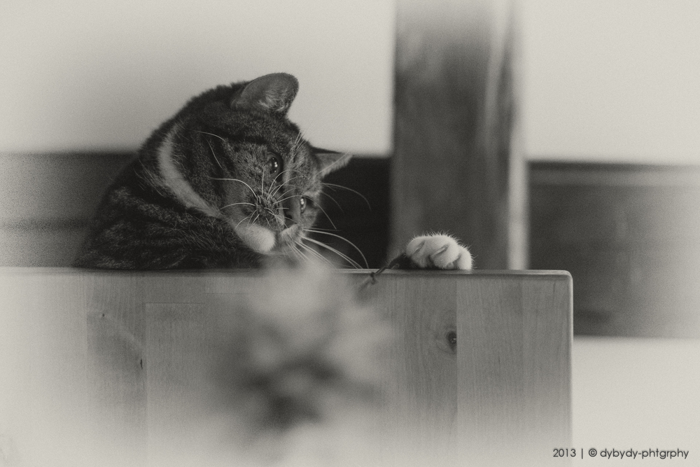 prone playing  - sony nex 7 | sel35 f1.8 | f2.0 | ISO1600 | 1/25