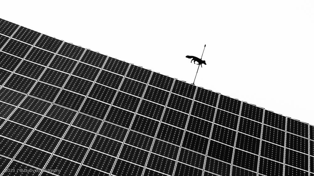 fox on the grid- sony nex 7 | sel35 f1.8 | f5.6 | ISO100 | 1/800