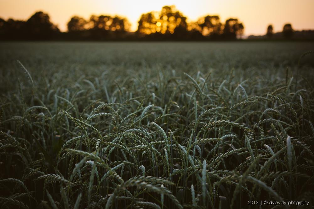 crop tangle  - sony nex 7 | sel35 f1.8 | f2.8 | ISO100 | 1/100