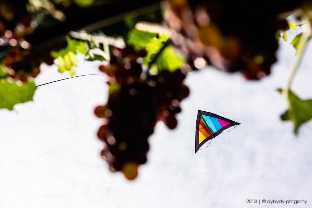 grape protector - sony nex 7 | sel35 f1.8 | f5.6 | ISO100 | 1/640