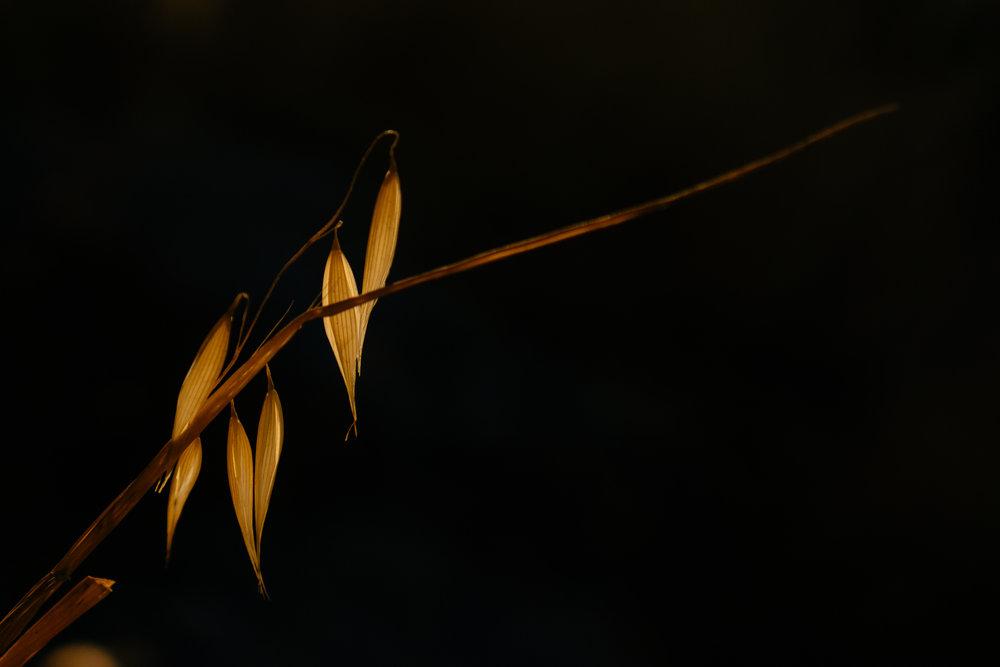 dark pureness