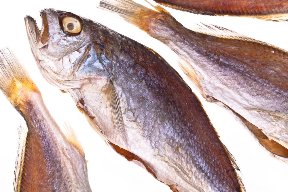 fish-772.jpg