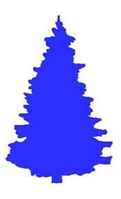 blue_pine.jpg