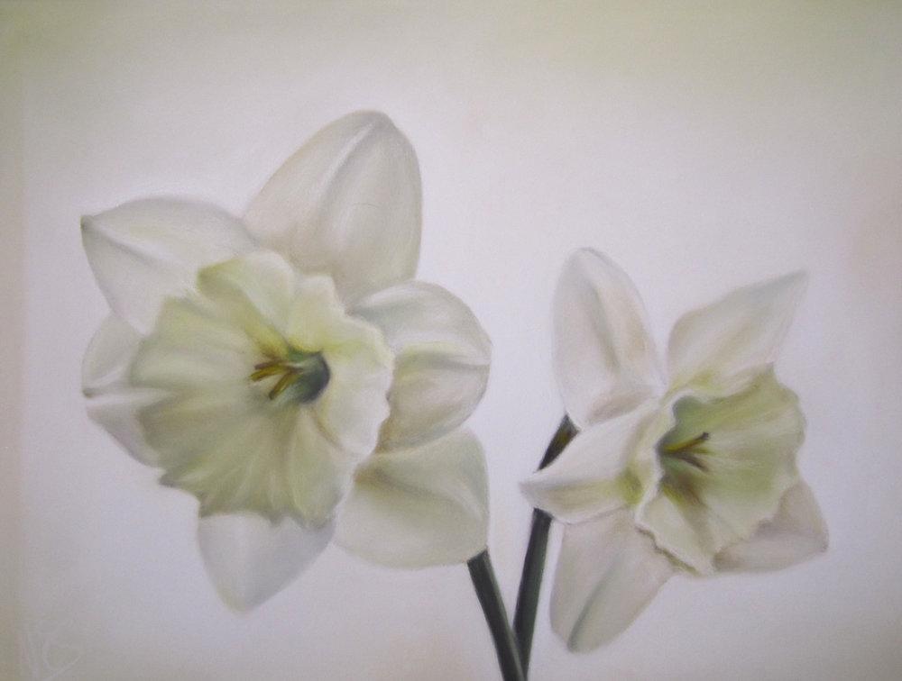 Snow Daffodils 17-21