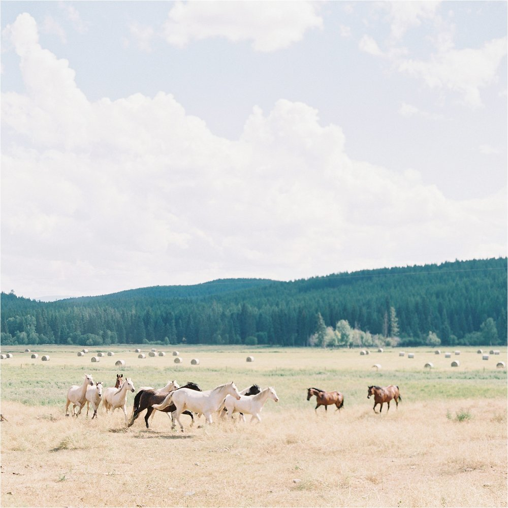 montana_whitefish_film_wedding_photographer_00018.jpg