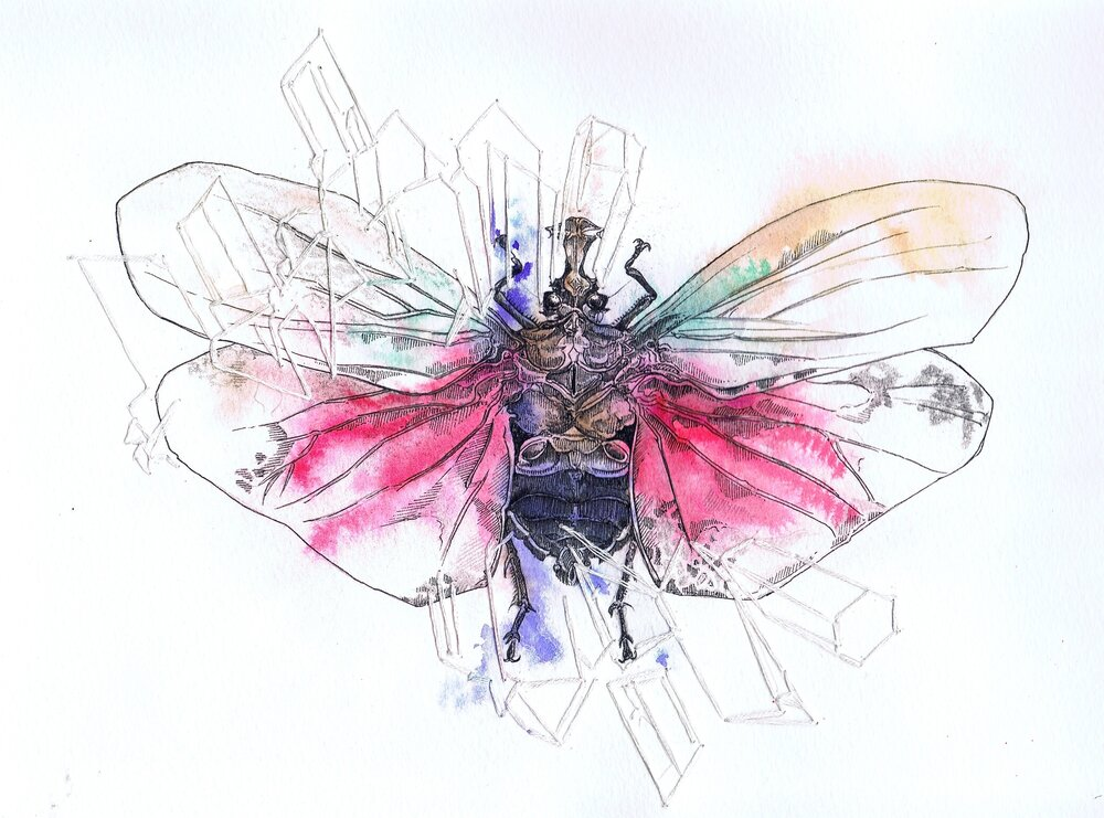 Diadem Lantern Fly