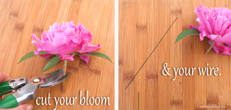 cut your bloom and your wire.jpg