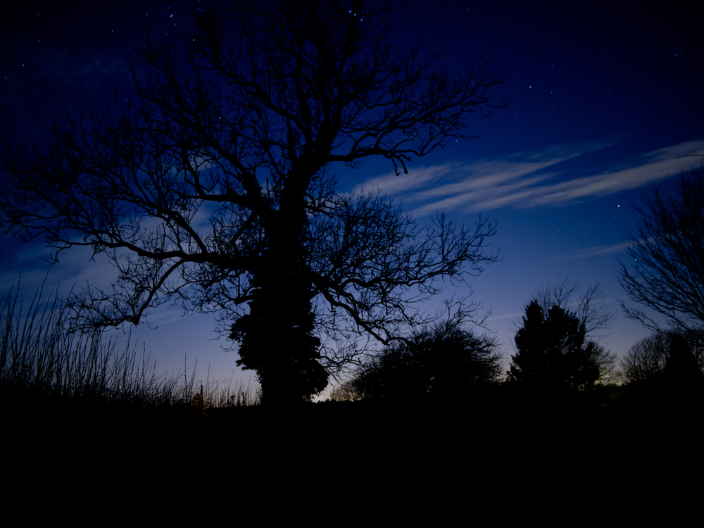 Silhouetes-03.jpg