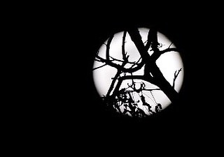 Full moon through branches. . . . . . #xt2 #fujixt2 #fullmoon #fuji_xseries #studiocity #witchinghour #luna #laurelcanyon #sky_captures #nakedplanet #earthscope