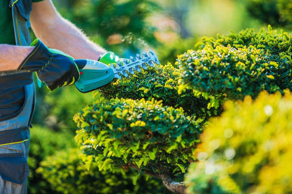 create curb appeal by trimming bushes at a house