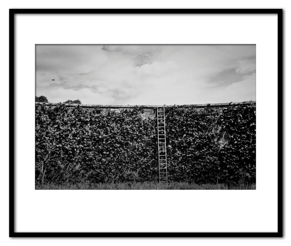 Wall & Ladder, Blenhiem- 1976.jpg