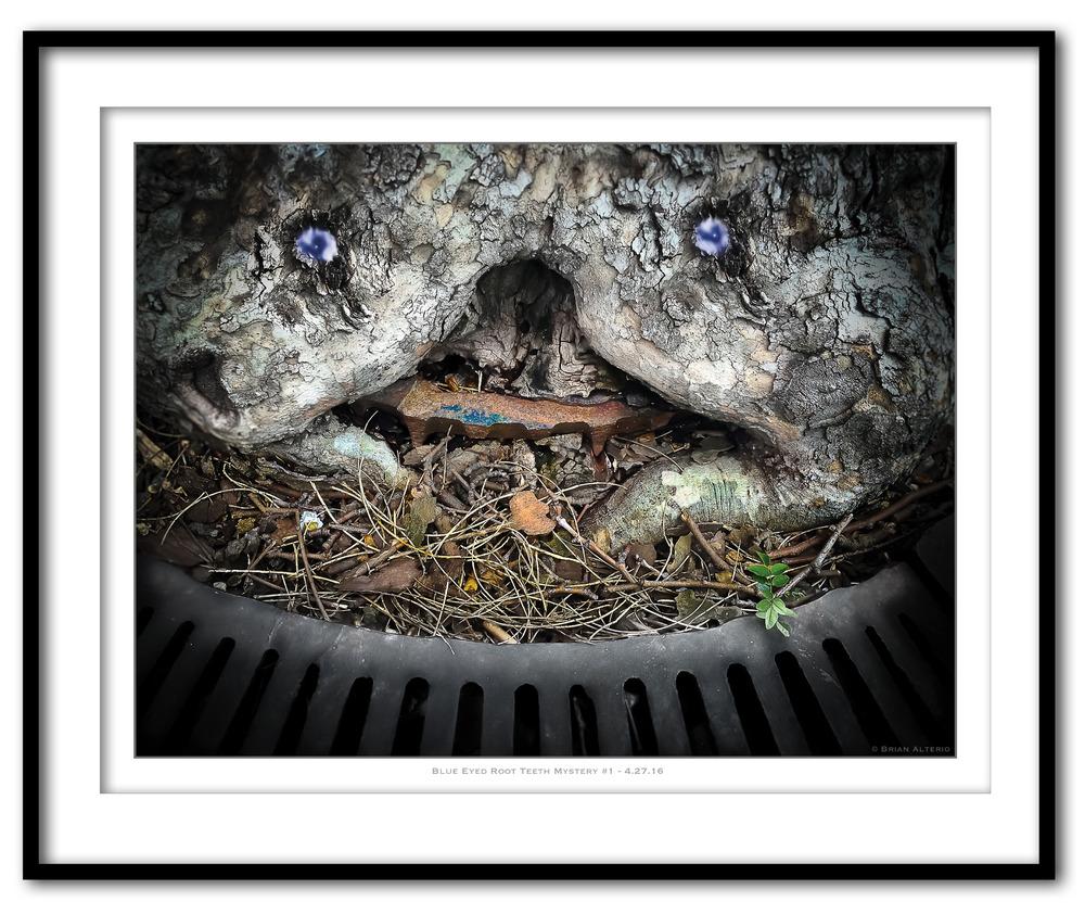 Blue Eyed Root Teeth Mystery #1 - 4.27.16- Framed.jpg