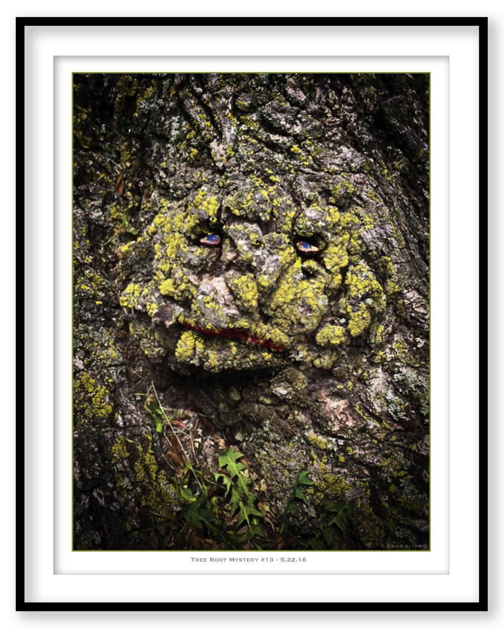 Tree Root Mystery #13 - 5.22.16 - Framed.jpg