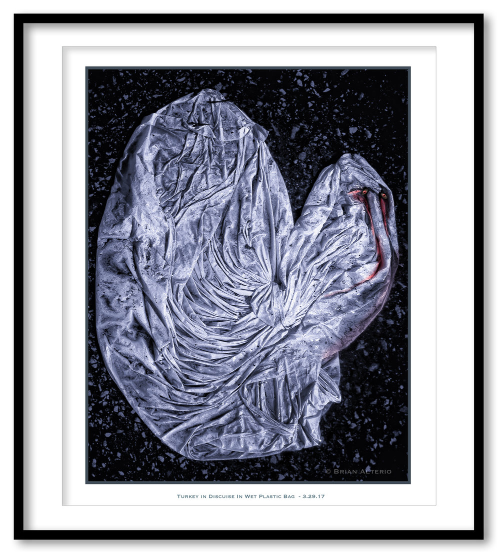 Turkey in Discuise In Wet Plastic Bag  - 3.29.17 -Framed.jpg