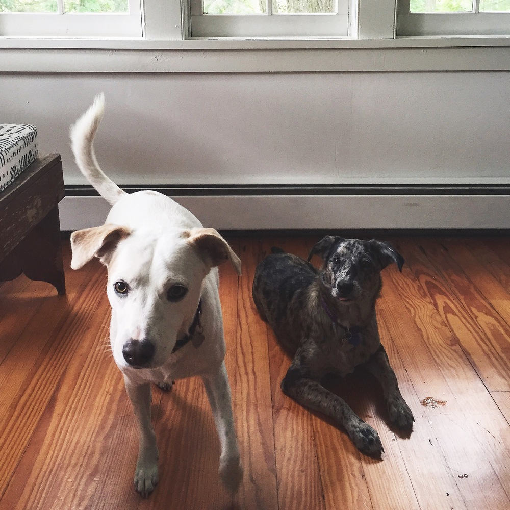 Hope and Winky, Accord NY
