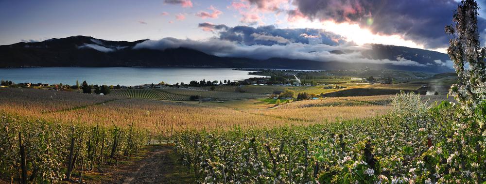 manson orchard panorama.jpg