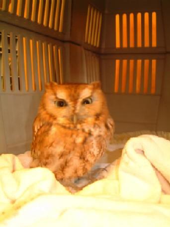 Surprise owl visit