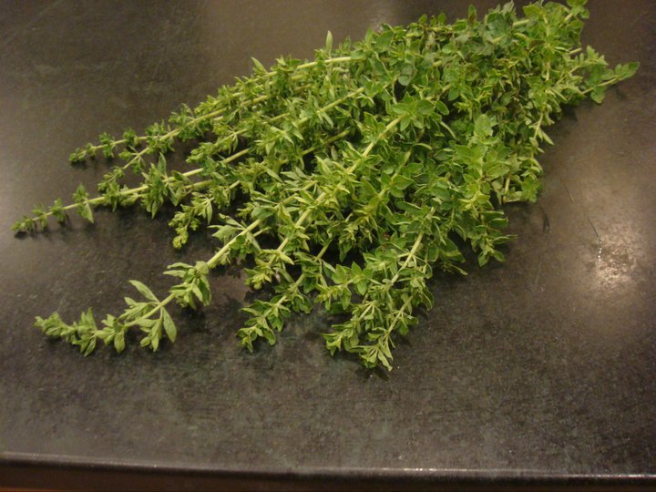 Fresh oregano from our herb garden