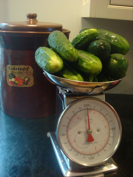 Getting ready to make pickles