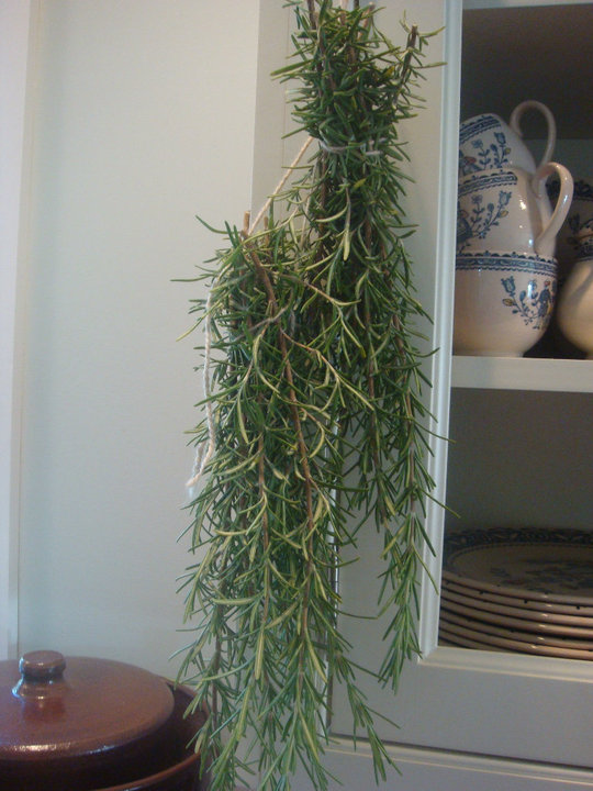 Rosemary hung up to dry