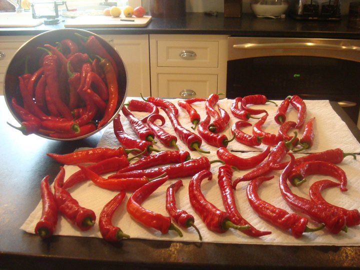 Preparing sweet peppers for the freezer