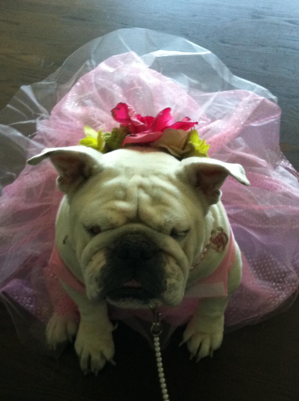 Juliet in her pink tutu