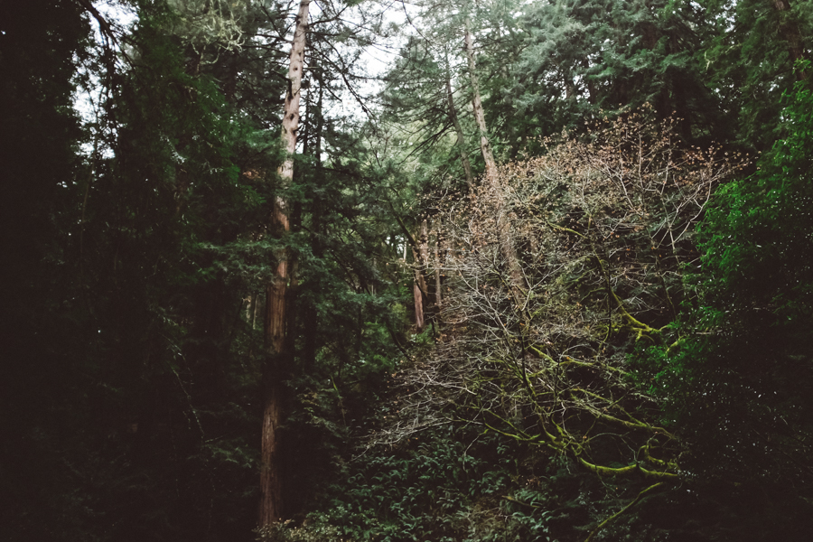 1409 muir woods01