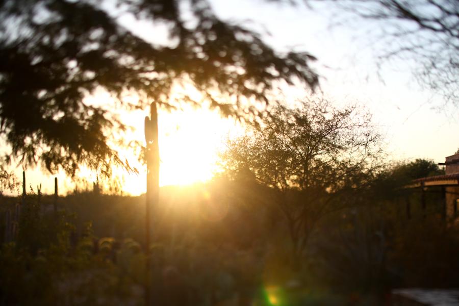 1120 desert botanical garden