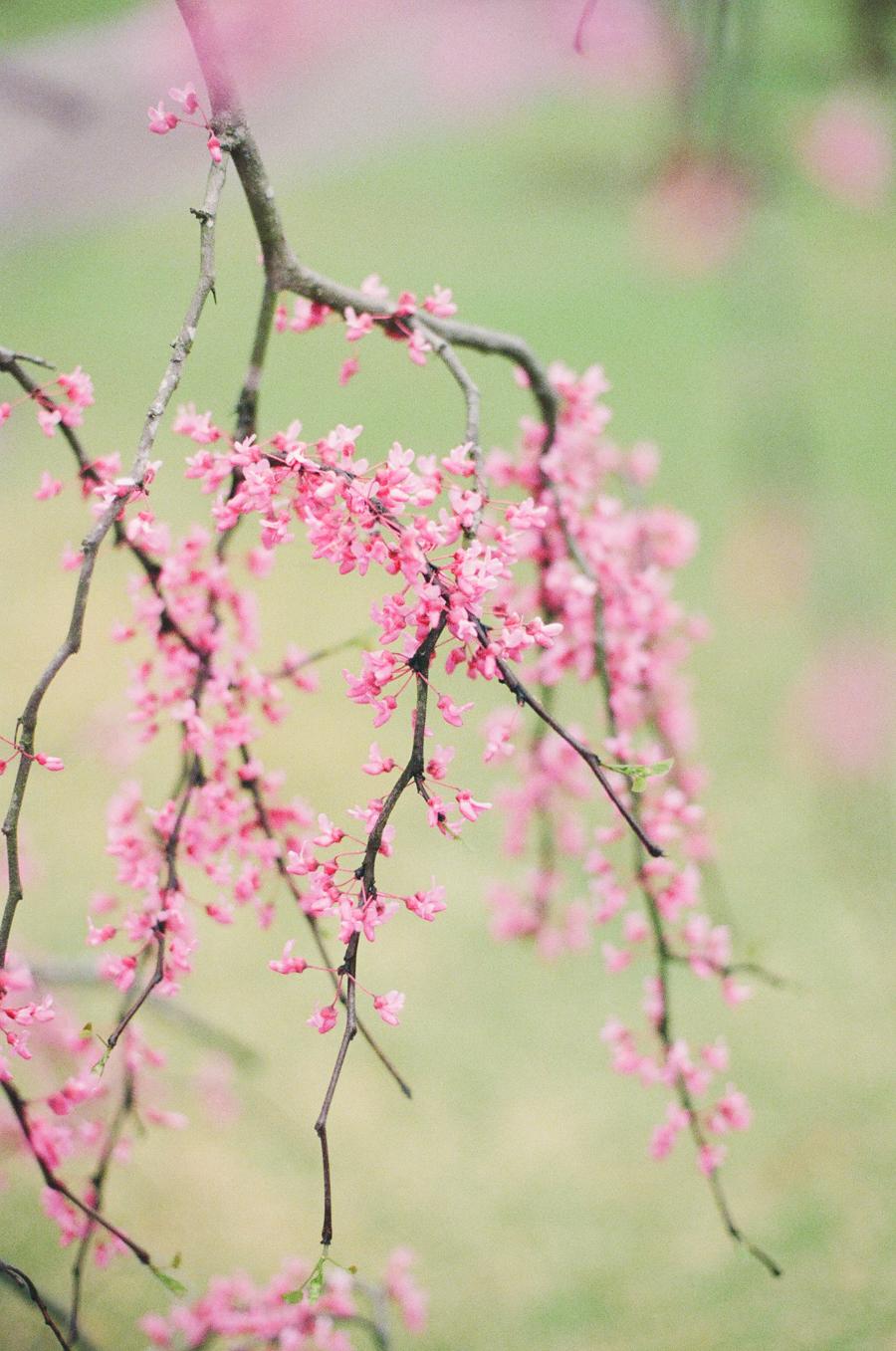 1486 birmingham botanical gardens film7.JPG