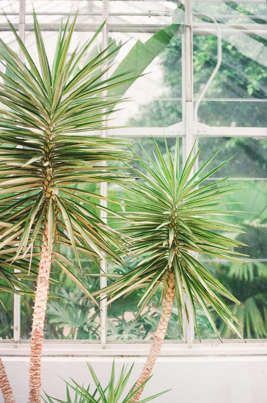 1486 birmingham botanical gardens film1.JPG