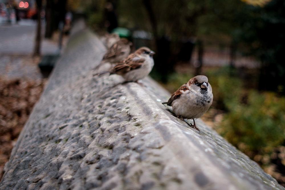 New york street photography (40 of 58).jpg
