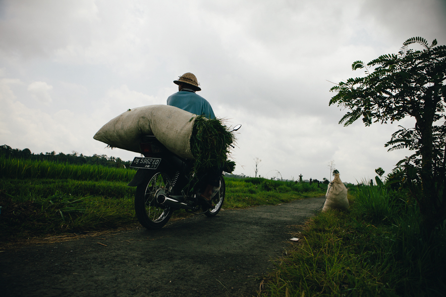 Guy carrying bag of rice in Ubud, bali.