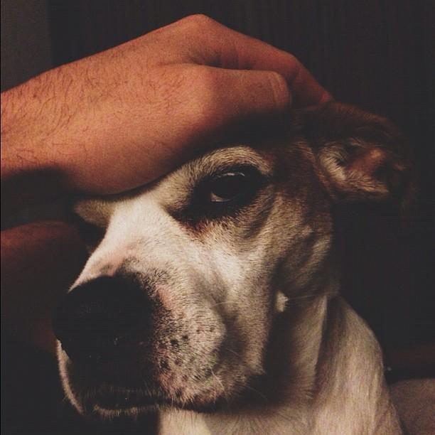 Head rub or annoyance? #sadiegram #dogsrule