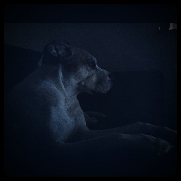Laptop watching, muzz.  (Taken with  instagram )