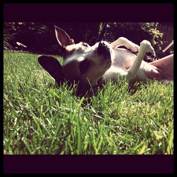 #crazy #dog #memorialday (Taken with  instagram )