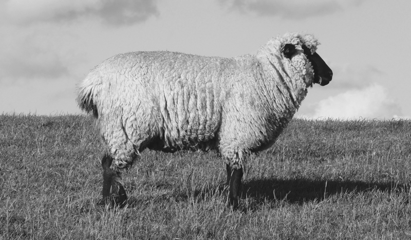 Buying Natural Fibres: Wool | thenotepasser.com