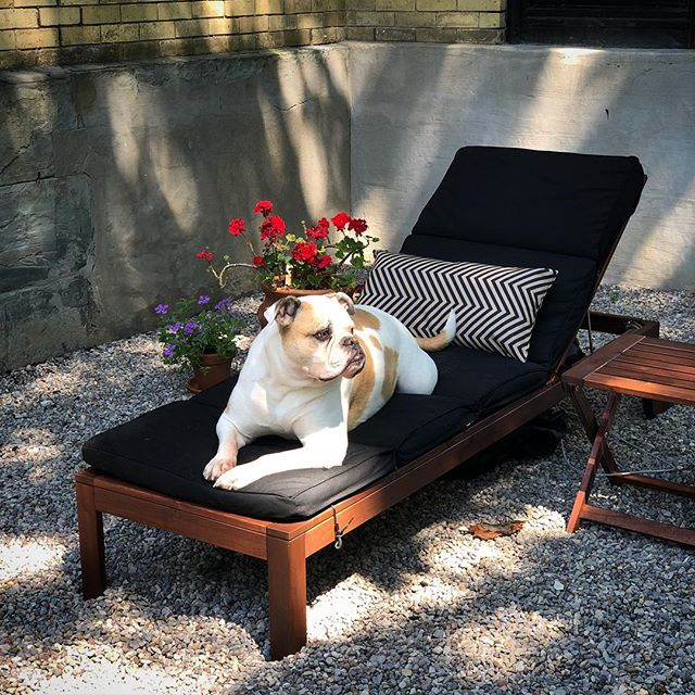 not even 5 minutes went by after I put the new cushions on that Fancy decided this was HER new hangout #americanbulldog #lifeincornhill #iwanttobemydog #ikea #dogsofinstagram #summerdays☀️