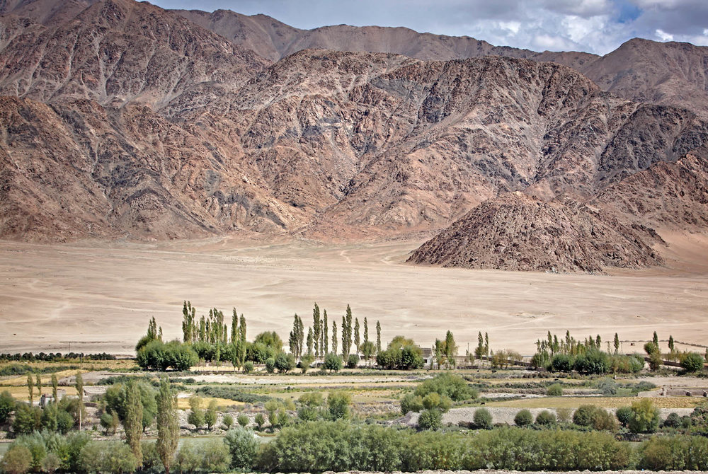 Irrigated fields and desert from Stakna Monastery, Ladakh, India