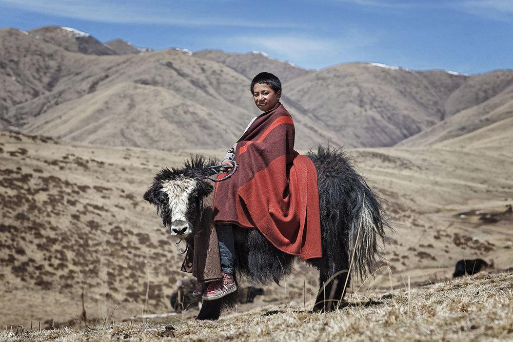 Boy and young yak, Norlha Textiles, Amdo, Tibet/China