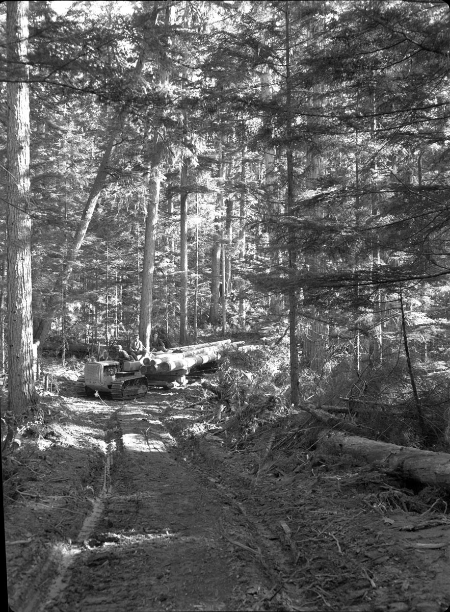 """Caterpillar"" with Load of Logs [DN-325]"