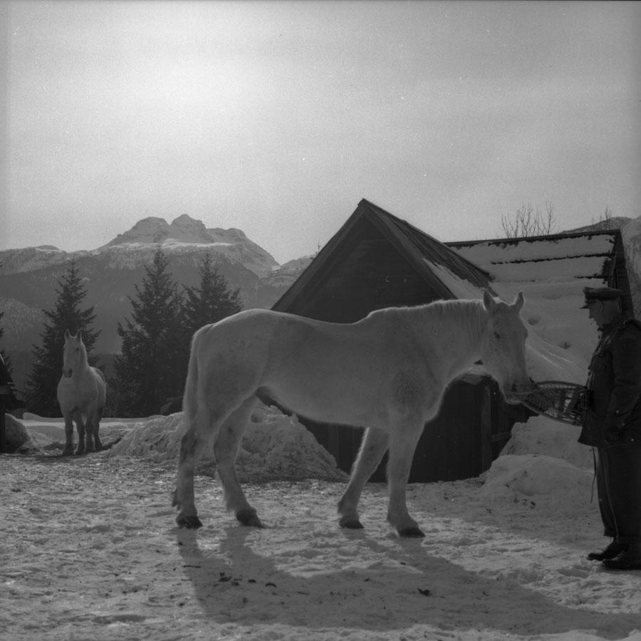 Lanzo Farm, 1960 [DN-816]