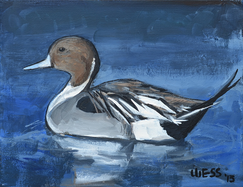 "Pintail  11x14"", SOLD"