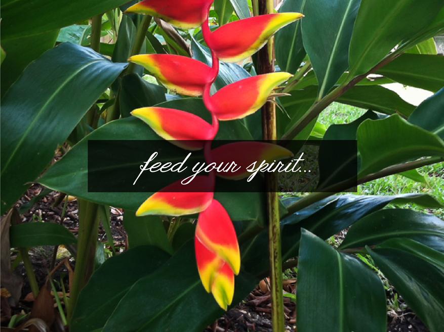 Flora-Tropica-HOME-FeedYourSpirit.jpg