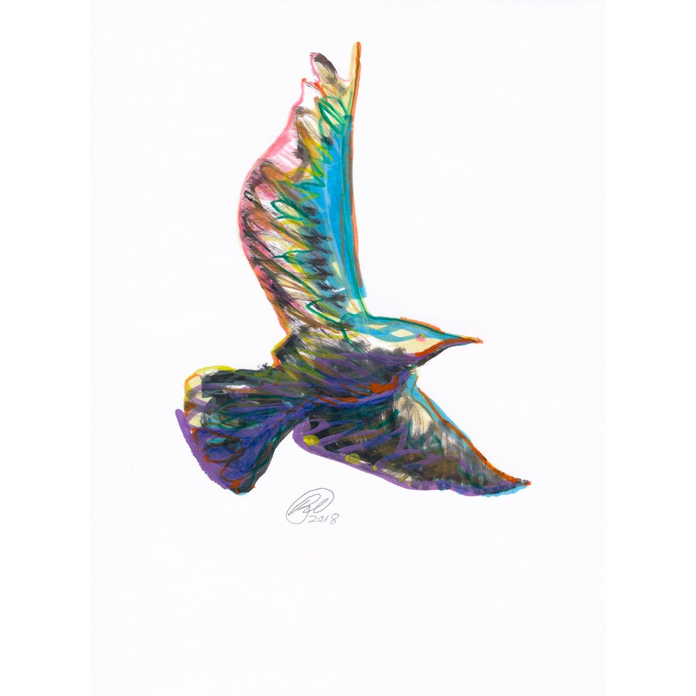 """Seagull  2018  Colored pencil, paint marker, and ink on cotton rag paper  8"""" x 10"""""""