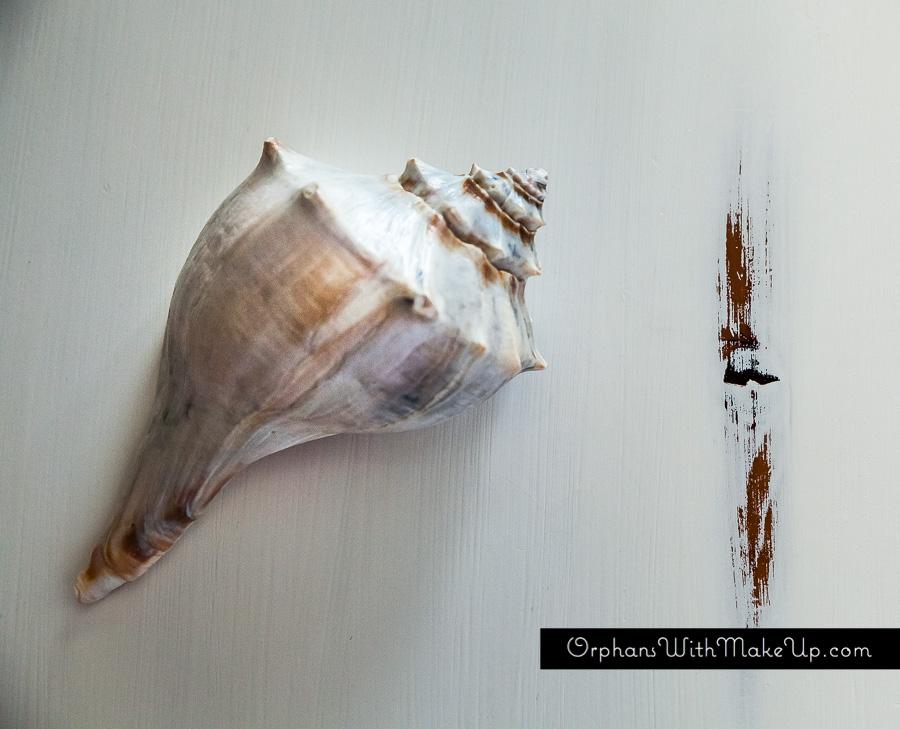 [sea shell]
